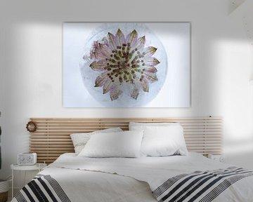 Pinke Blüte in Eiskugel 1