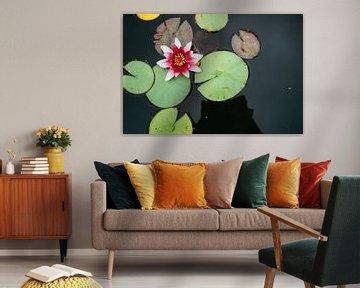 Rosa Seerose im Wasser von Patrycja Polechonska