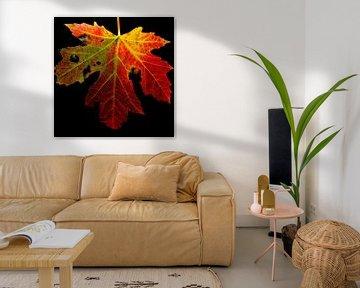 Gekleurd de herfst in van Jolanda de Jong-Jansen