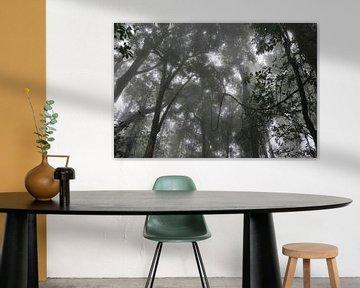 Rainforest van Diederik De Reuse