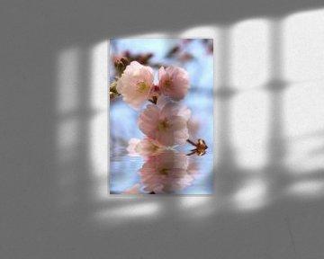 Zierkirschenblüte van Dagmar Marina
