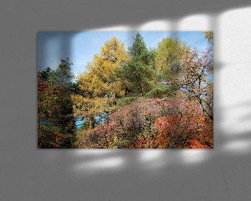 Prachtige herfstkleuren in een bos in Schotland von Susan Dekker