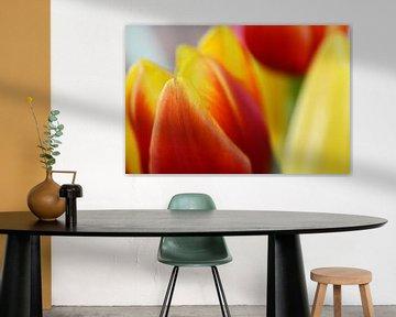 Tulips von Susanne Herppich