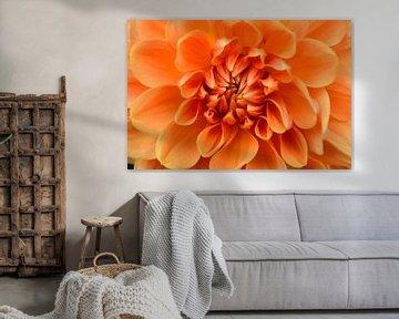 Oranje Dahlia von Susan Dekker