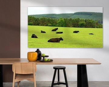 Le bétail Angus sur Gisela Scheffbuch