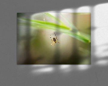 Spin in web - Elevatie bokeh von Rouzbeh Tahmassian