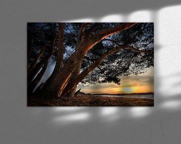 Bomen en duinen von Mark Leeman