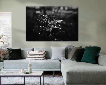 Droplets catching light van Wouter Brandsma