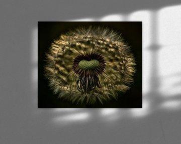 Paardenbloem van Jan Paul Kraaij