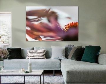 Zonnehoed of Echinacea von Rens Kromhout