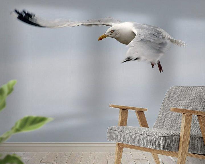 Beispiel fototapete: Meeuw von Harrie Muis