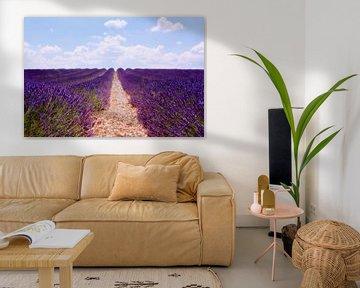 Lavendelfeld von Claudia Moeckel