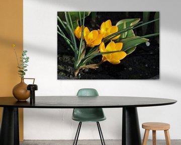 Bloemen in de zon von Dennis Visser