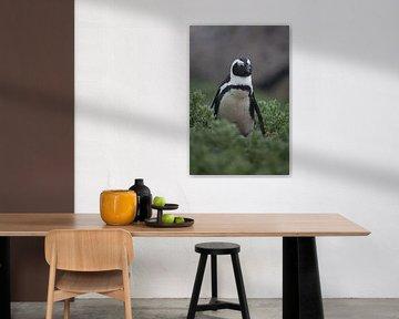 Pinguin von Catching Moments
