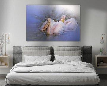 Pelicans van Ursula Di Chito