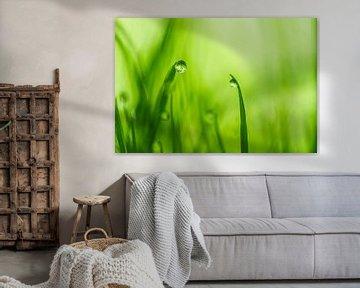 In een groen groen land van Irene Lommers