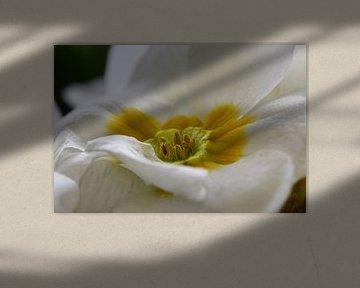 witte bloem van Bert ten Brink