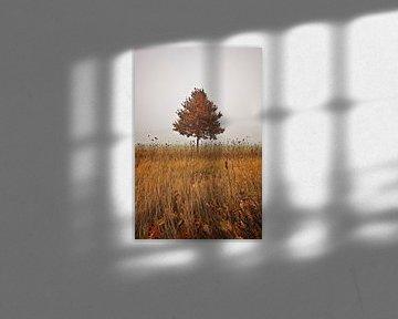Herbstbaum van Petra Voß