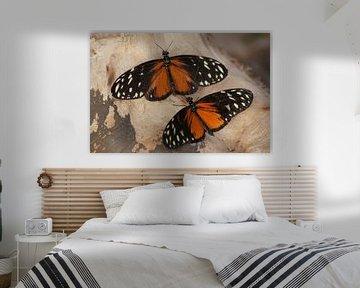 Monarchvlinders von Ronald en Bart van Berkel