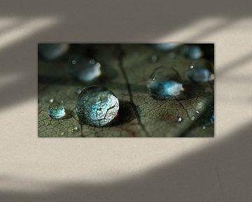 waterdruppels op een herfstblad van Anouschka Hendriks