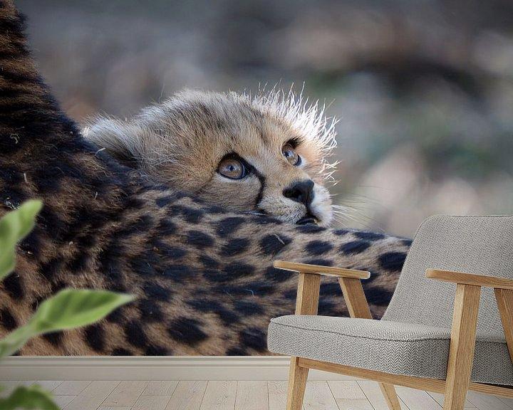 Beispiel fototapete: Gepard von Edwin Butter