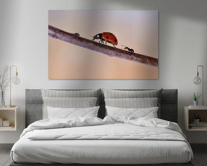 Impression: Ant chases ladybug sur Anouschka Hendriks
