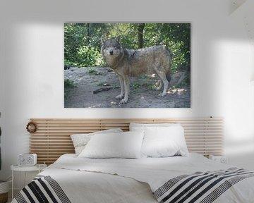 Europese wolf von Ronald en Bart van Berkel
