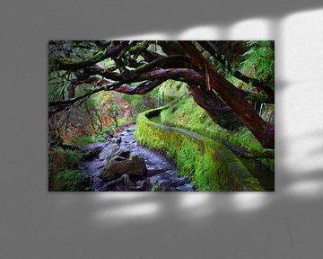 Levada met kromme bomen in Madeira van Michel van Kooten