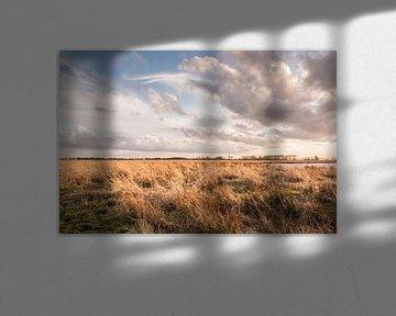 Rietkragen in de polder van Richard Janssen