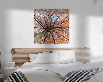 Magnificant Autumn van Peter van den Berg