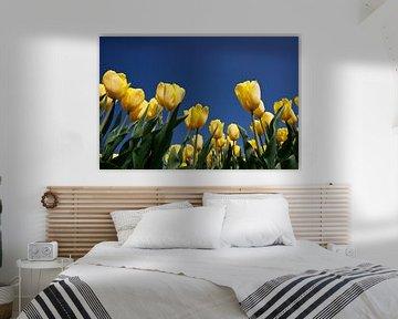 Gele tulpen van Ties van Veelen
