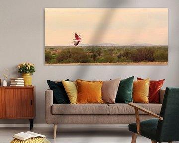 Twee  rose kaketoe's in spiegelvlucht van Henk van den Brink