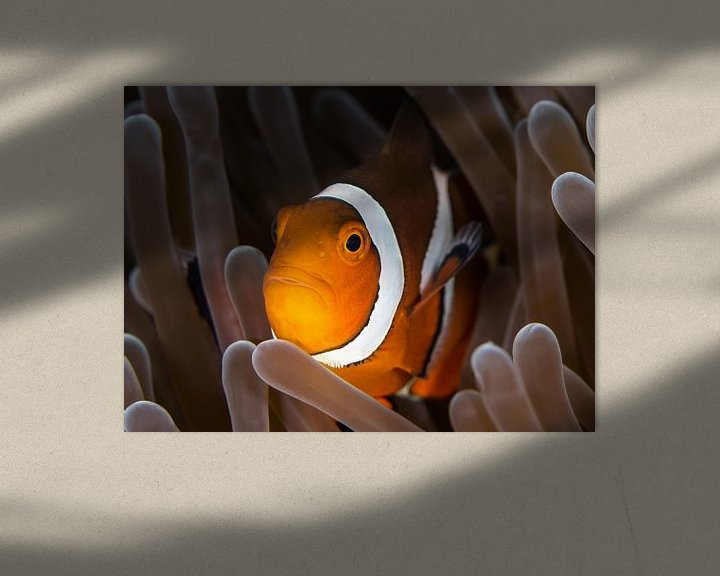 Sfeerimpressie: Nemo van Linda Raaphorst