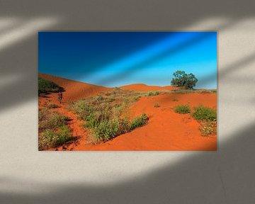 Rode zandduinen met begroeïng van struiken von Henk van den Brink