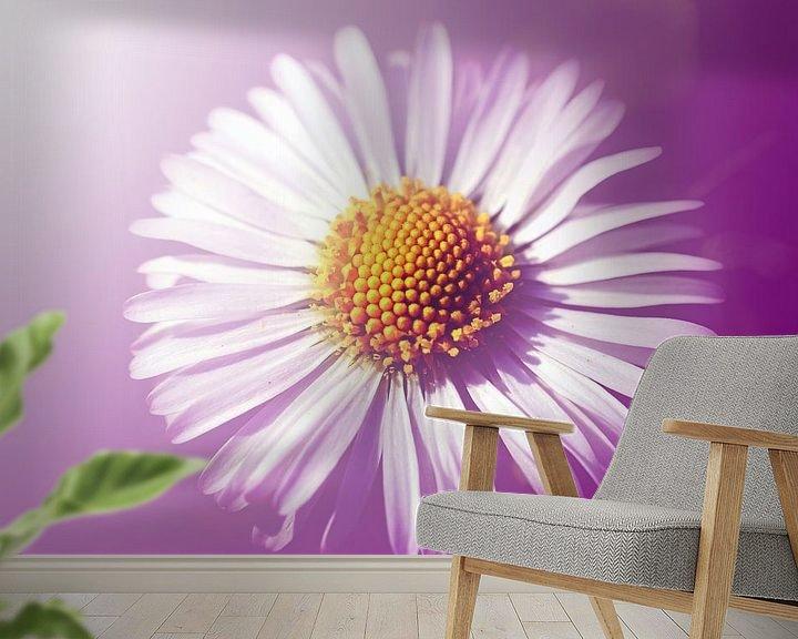 Beispiel fototapete: Gänseblümchen von Roswitha Lorz