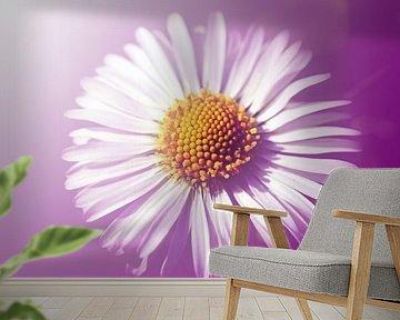Gänseblümchen van Roswitha Lorz