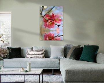 Zierquittenblüten van Dagmar Marina