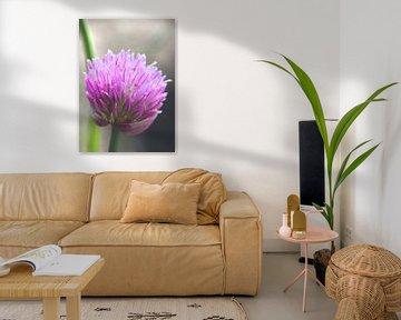 Schnittlauchblüte van Roswitha Lorz
