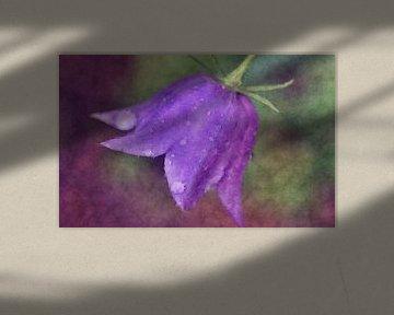 Blue bell flower von Roswitha Lorz
