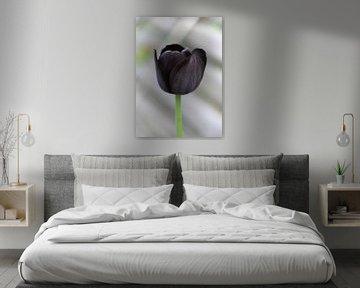 Black tulip von Roswitha Lorz
