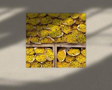 Yellow Roses sur Marcel Roggisch