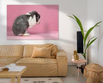 Hangoorkonijntje met roze achtergrond von Dagmar Hijmans