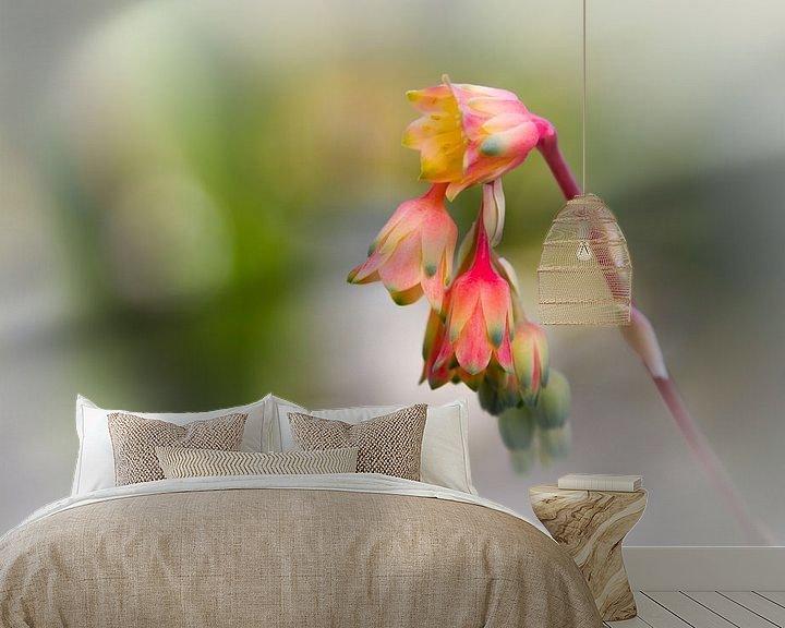 Sfeerimpressie behang: Echeveria setosa van Ursula Di Chito