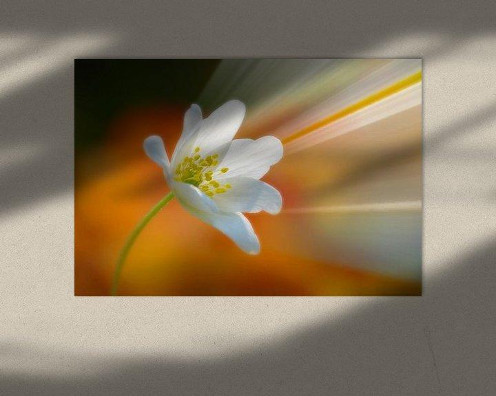 Sfeerimpressie: Flower Power (Bosanemoon met Stralen) van Caroline Lichthart