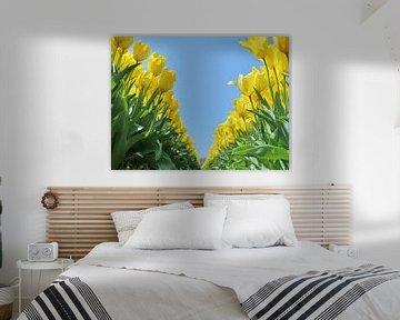 Gele tulpen van Leendert van Rossum