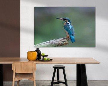 Ijsvogel, Kingfisher van Ron Westbroek