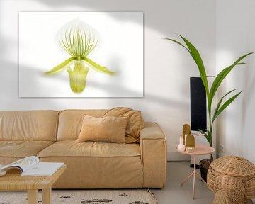 Orchidee in high key van Frouwkje Fotografie