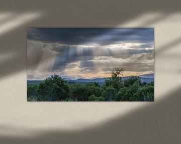 zonnestralen  von Bert Hunink