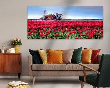 Tulpen Sproeien von Alex Hiemstra