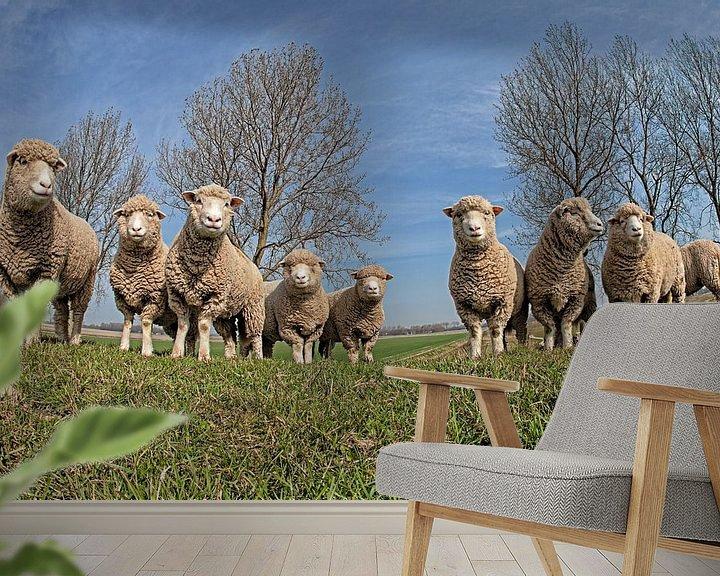 Sfeerimpressie behang: Schapen van Anne-Marie Vermaat